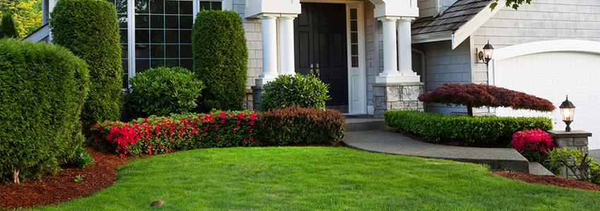 Service lawn header image