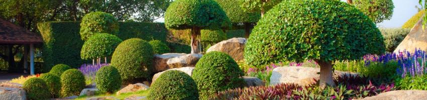 tree shrub